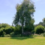 Liegewiese und Wald sind nahe am Haus